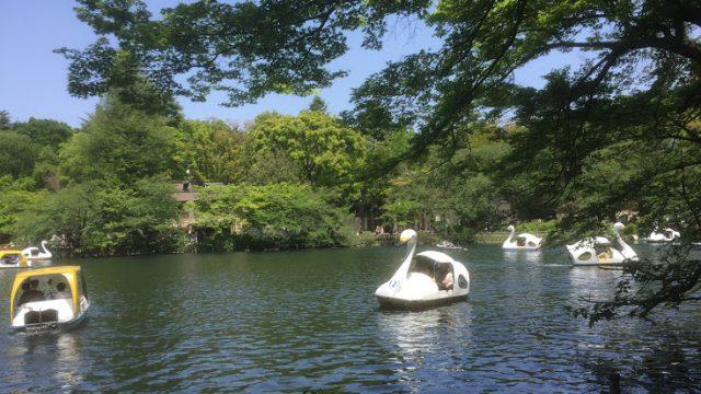 井の頭公園の池
